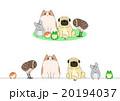 ペットのセット、一列とグループ 20194037