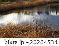 晩秋の湿原 20204534