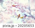 桜とヤマガラ 20205653