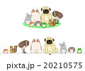 ペットのセット、一列とグループ 20210575