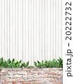 植物 葉 ナチュラルのイラスト 20222732