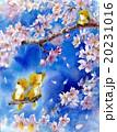 桜と犬_ブランコ 20231016