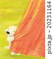 白犬_ピンクのカーテン 20231164
