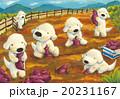 白犬_芋掘り 20231167