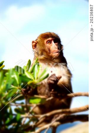 南国の猿 20236807