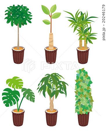 観葉植物 6本セットのイラスト素材 20246179 Pixta