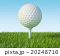 Golf ball on the green lawn. 20248716