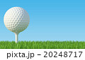 Golf ball on the green lawn 20248717