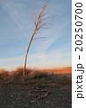 荒野とハート 20250700