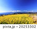 吾妻山公園の早春 20253302