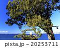 晴れ 森戸神社 冬の写真 20253711