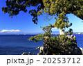 晴れ 森戸神社 冬の写真 20253712