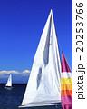 冬のヨット 20253766