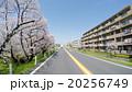 【ドライバー主観】玉堤通りの花見ドライブ 20256749