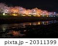 夜桜 桜 花の写真 20311399