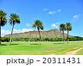 青空 ハワイ 椰子の木の写真 20311431