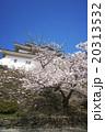 城 桜 和歌山城の写真 20313532