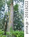 木 自然 20316222