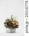 ドライフラワーと多肉植物 20316776