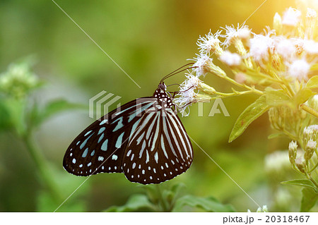 Butterfly on a white flower