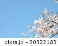 桜の春の写真 20322183