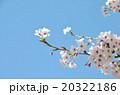 桜の春の写真 20322186