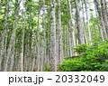 シラビソの森 20332049