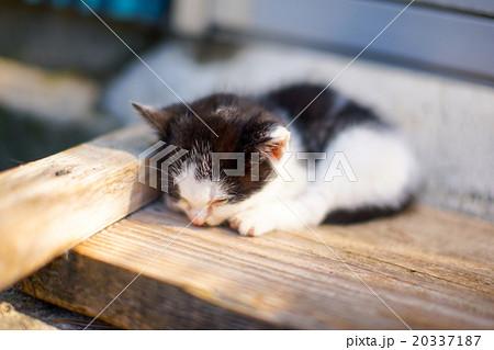 猫の楽園「田代島」ネコの島(ΦωΦ)ポカポカ日向ぼっこ昼寝スヤスヤ20337187