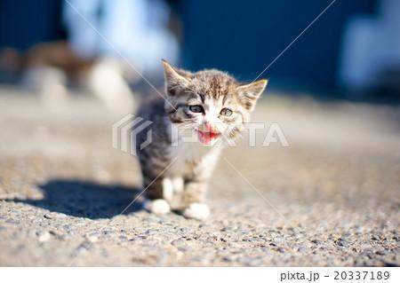 猫の楽園「田代島」ネコの島(ΦωΦ)お母さんを探す甘えん坊の子ネコCAT ISLANDお母にゃ~ん20337189