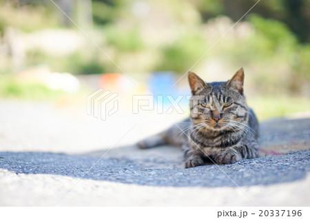 猫の楽園「田代島」ネコの島(ΦωΦ)木陰日陰でネムネムのーんびり目つき悪い20337196