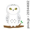 フクロウ 20344682