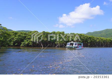 沖縄県西表島・仲間川 20353361
