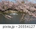 埼玉県川越市御伊勢塚公園付近の桜 その3 20354127