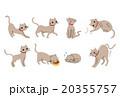 ペット 猫 20355757