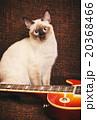 タイ人 ねこ ネコの写真 20368466