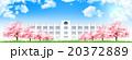 桜 学校 桜並木のイラスト 20372889