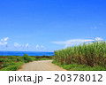 青空 海 サトウキビ畑の写真 20378012