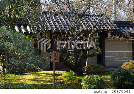 永観堂禅林寺 悲田梅(2016.1) 20379041