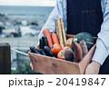 野菜の詰め合わせ 20419847