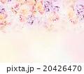 薔薇 花 花柄のイラスト 20426470