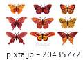 ベクター 組み合わせ 飾りのイラスト 20435772