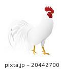 鶏 酉年 年賀素材のイラスト 20442700