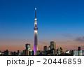 東京スカイツリー タワー 夜景の写真 20446859