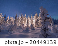 Camp fire in forest in Lapland 20449139