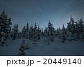 Frozen forest in Finland, Lapland 20449140