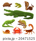 Reptiles And Amphibians Set 20471525