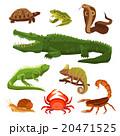 は虫類 ハ虫類 レプタイルのイラスト 20471525