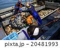 オホーツク海の恵み 20481993