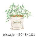 観葉植物鉢植え 20484181