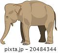 アジアゾウ 20484344